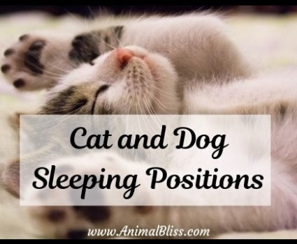 The Meaning of Cat and Dog Sleeping Positions
