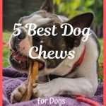 5 Best Dog Chews for Dogs That Love to Chomp