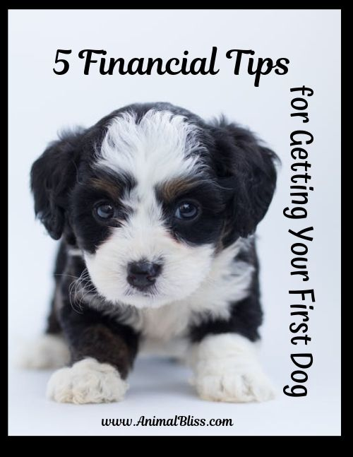 5 Financial Tips for Getting Your First Dog
