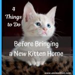 4 Things to Do Before Bringing a New Kitten Home