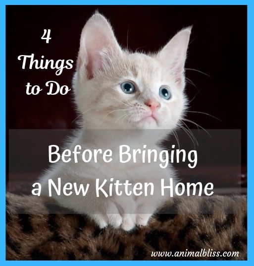 4 Things to do Before Bringing Home a New Kitten
