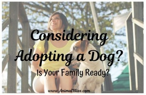 Considering Adopting a Dog? Is Your Family Ready?