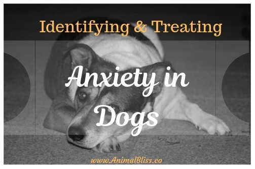 Identifying and Treating Anxiety in Dogs