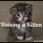 5 Important Tips on Raising a Kitten, Cat Care