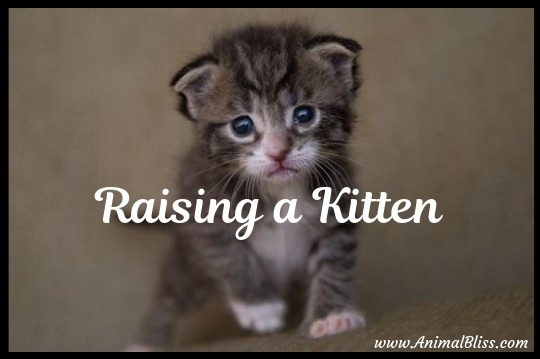 5 Important Tips on Raising a Kitten