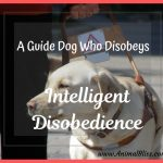 A Guide Dog Who Disobeys: A Highly Sought-After Skill