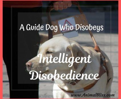 Intelligent Disobedience Seeing Eye Dogs