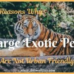 4 Reasons Why Large Exotic Pets are Not Urban-Friendly