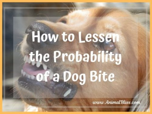How to Lessen the Probability of a Dog Bite