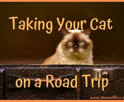 Tips for Taking Your Cat on a Road Trip