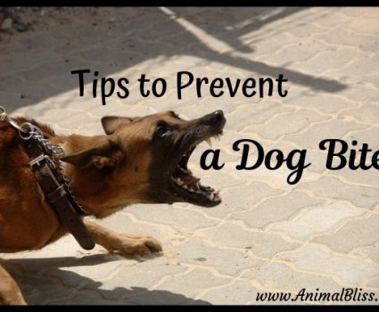 Tips To Prevent A Dog Bite: Common Areas For Bite Injuries