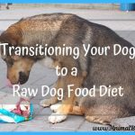 Transitioning Your Dog to a Raw Dog Food Diet