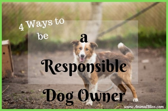 Getting a Dog? 4 Ways to be a Responsible Dog Owner