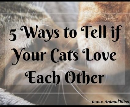 5 Ways to Tell if Your Cats Love Each Other