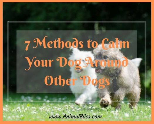 7 Methods to Calm Your Dog Around Other Dogs