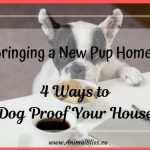 Bringing a New Pup Home? 4 Ways to Dog-Proof Your House