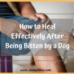 How to Heal Effectively After Being Bitten by a Dog