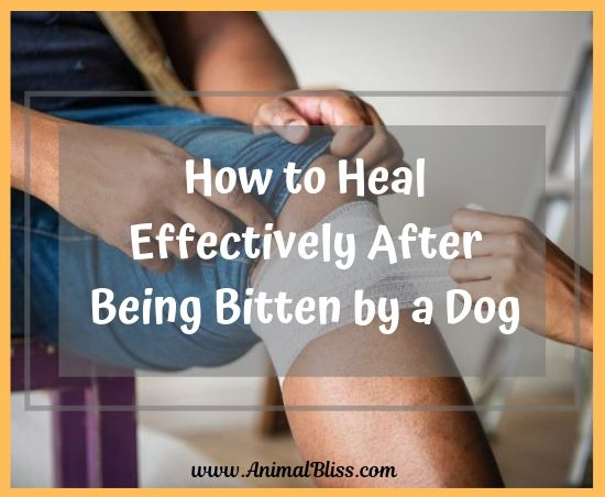 How to Heal After Being Bitten by a Dog