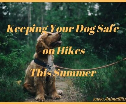 3 Tips for Keeping Your Dog Safe on Hikes This Summer