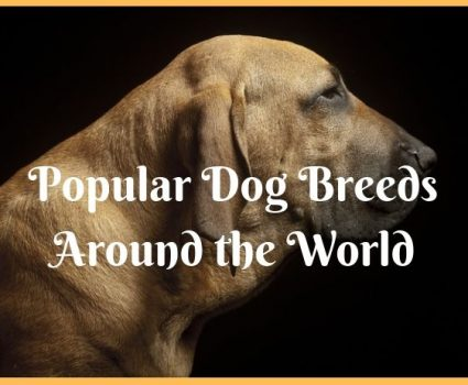 Popular Dog Breeds Around the World infographic