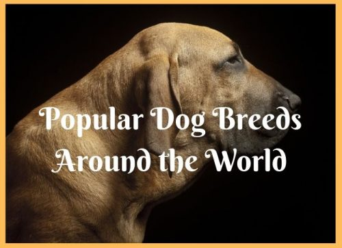 Popular Dog Breeds Around the World infographic