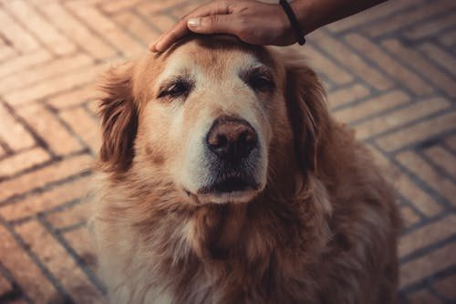 7 Tips to Take Good Care of Your Senior Dog