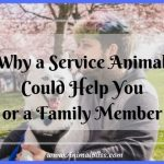 Why a Service Animal Could Help You or a Family Member