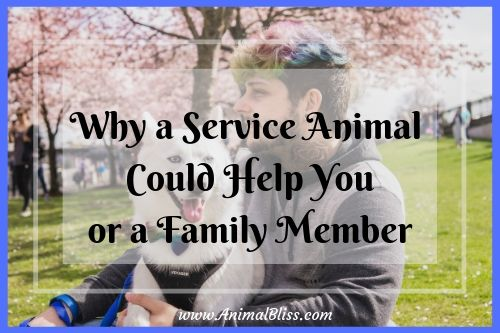 Have a close look at how a service animal could potentially assist you or a family member.