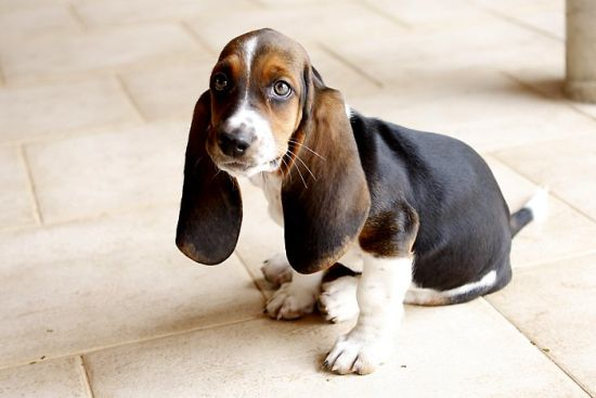 Short-Legged Dogs and Their History