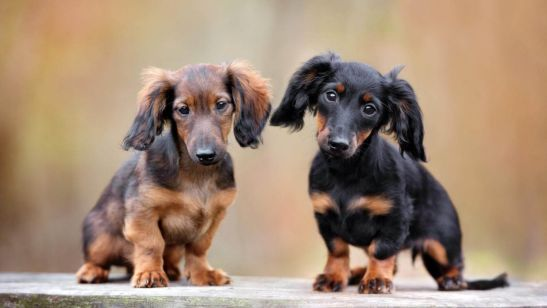 6 Short-Legged Dogs and Their History