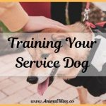 Training Your Service Dog is Easier Than You Might Think