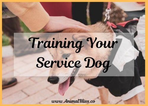 Training Your Service Dog is Easier Than You Think