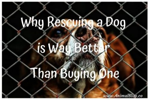 6 Reasons Why Rescuing a Dog is Way Better Than Buying One