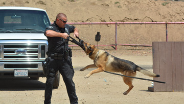 Building a Bond with Your K9 Partner
