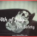 4th of July Pet Safety – Steps for Stress-Free Festivities