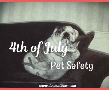 4th of July Pet Safety - Steps for Stress-Free Festivities