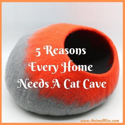 5 Reasons Every Home Needs A Cat Cave