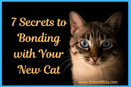 7 Secrets to Bonding With Your New Cat