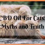 CBD Oil For Cats: Myths and Truth – Holistic Health