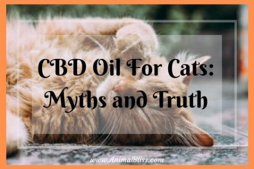 CBD Oil for Cats: Myths and Truth