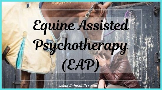 Equine Assisted Psychotherapy (EAP), Horse Therapy, Hippotherapy