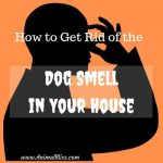 Easy Hacks to Get Rid of the Dog Smell in Your House