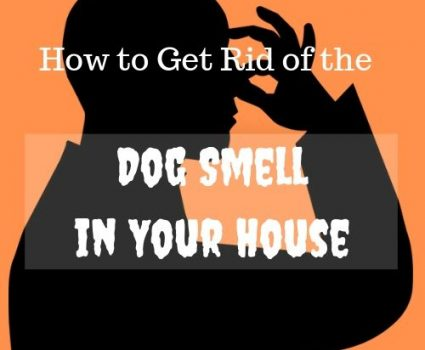 Easy Hacks to Help You Get Rid of the Dog Smell in Your House