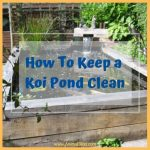 How To Keep a Koi Pond Clean: Methods and Supplies