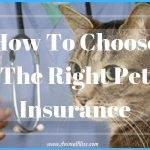 How To Choose The Right Pet Insurance