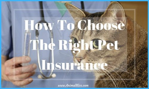 How to Chooose the Right Pet Insurance