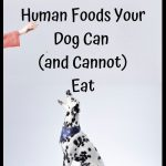 50 Human Foods Your Dog Can (and Cannot) Eat