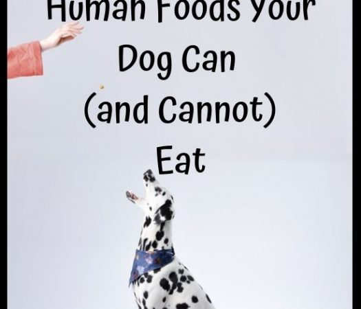 Human Foods Your Dog Can and Cannot Eat
