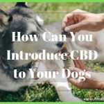 How to Introduce CBD to Your Dog Safely and Effectively