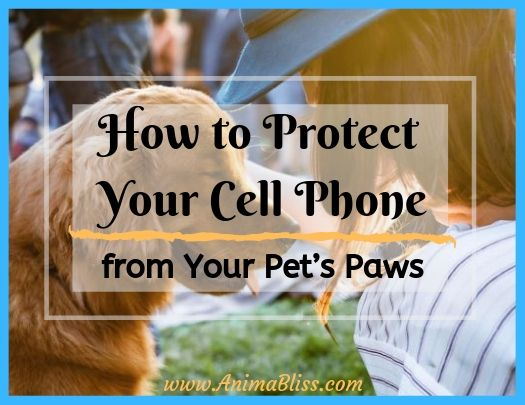 How to Protect Your Cell Phone from Your Pet's Paws